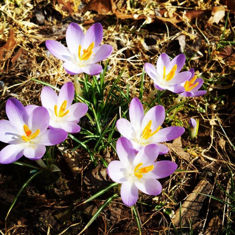 De ochtend? gebied van de lente van groen gras en blauwe bewolkte hemel royalty-vrije stock afbeeldingen