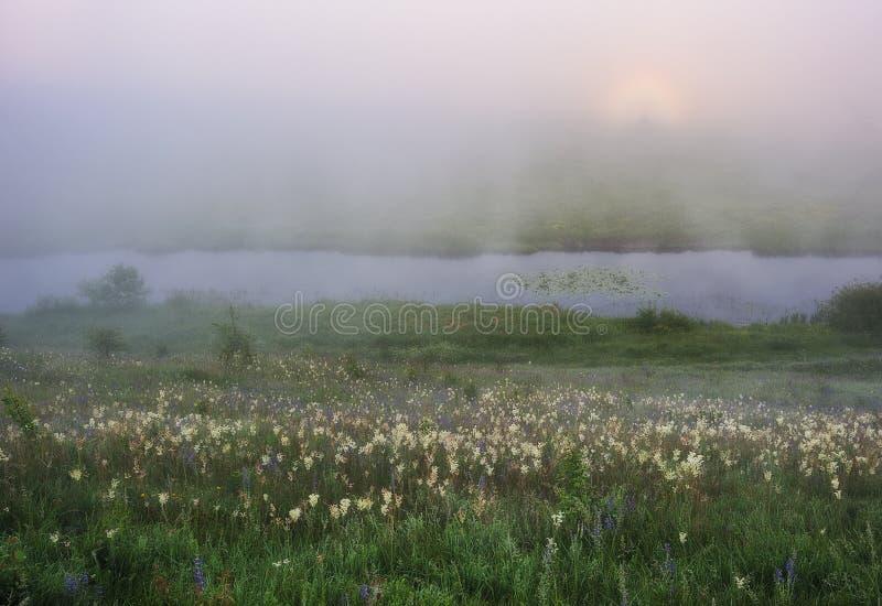 De ochtend? gebied van de lente van groen gras en blauwe bewolkte hemel Zonsopgang in de vallei van de schilderachtige rivier stock foto's