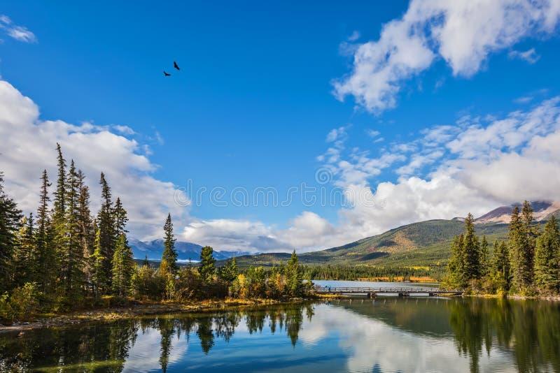 De ochtend in Jasper National Park royalty-vrije stock foto's
