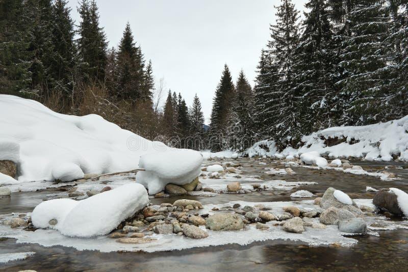 De ochtend op bevroren rivier in de winter, lage hoekfoto, nadruk op ijs behandelde stenen, met naaldbomen aan beide kanten stock foto