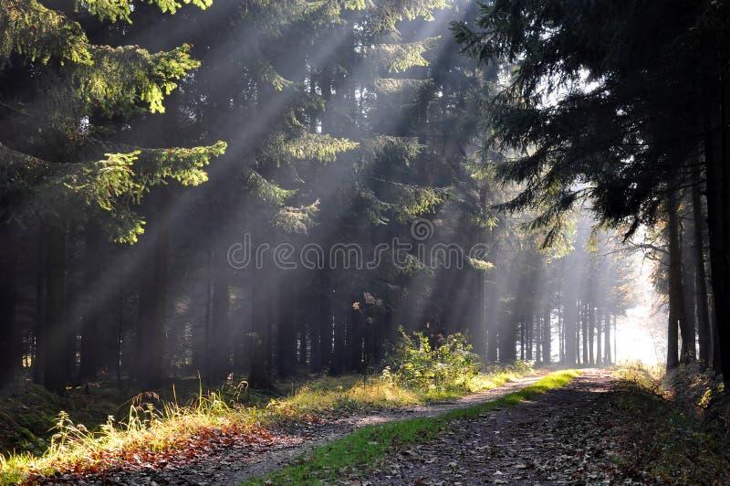 De ochtend van de herfst stock fotografie