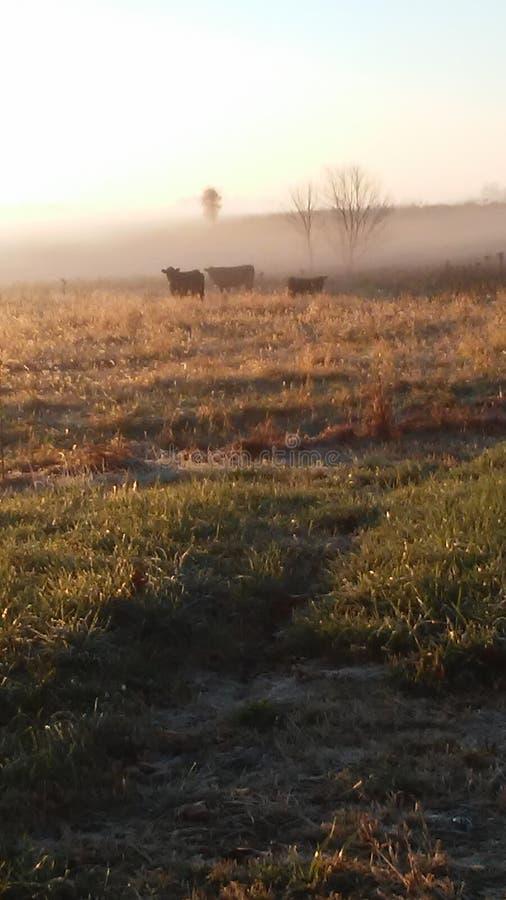 De ochtend van het land stock foto's