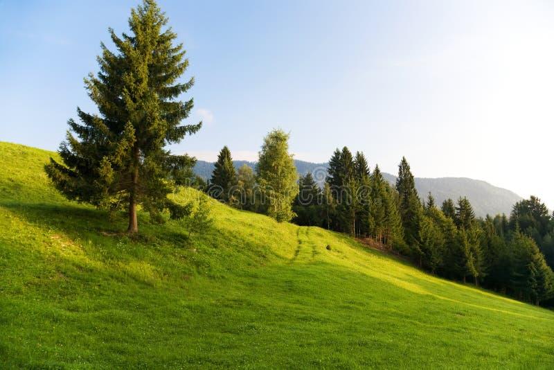 De ochtendlandschap van alpen stock afbeeldingen