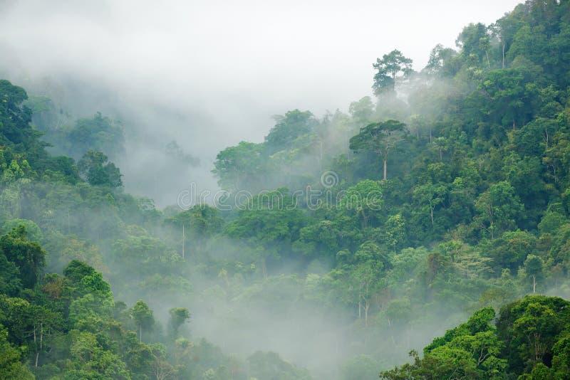 De ochtendmist van het regenwoud royalty-vrije stock afbeelding