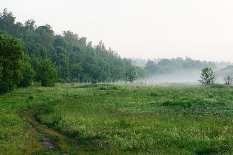 De ochtendnevel over groene weide, buigt landelijke weg en bosrug stock afbeeldingen