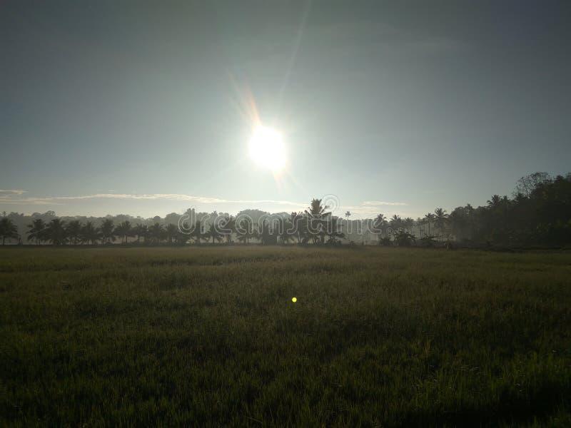 De ochtendzon glanst stock fotografie