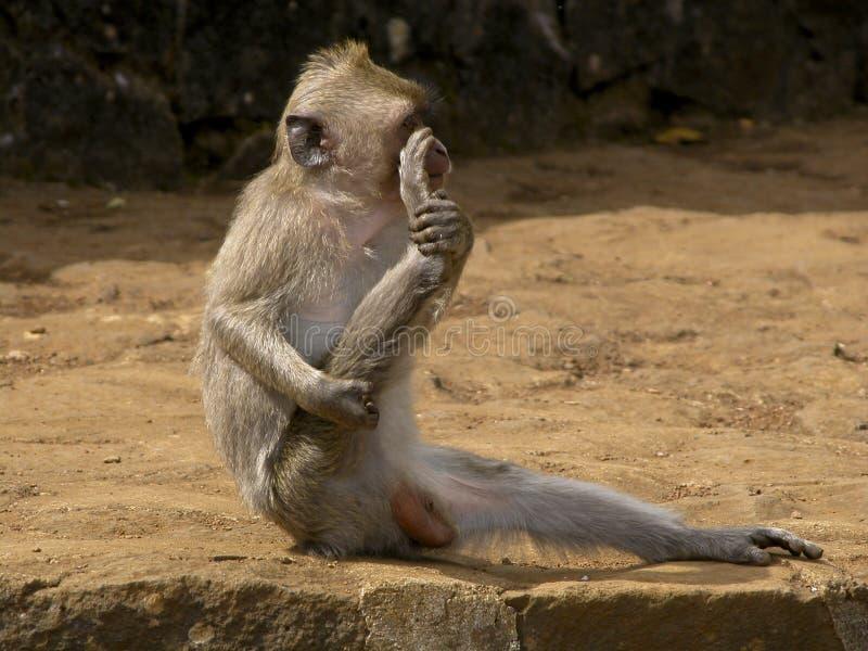 De oefening van de aap stock fotografie