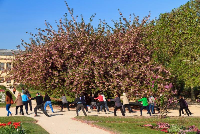De oefening van de bloesemboom stock afbeelding
