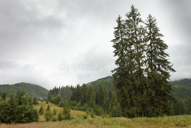 De Oekraïense Karpaten na een warme de zomerregen stock afbeelding