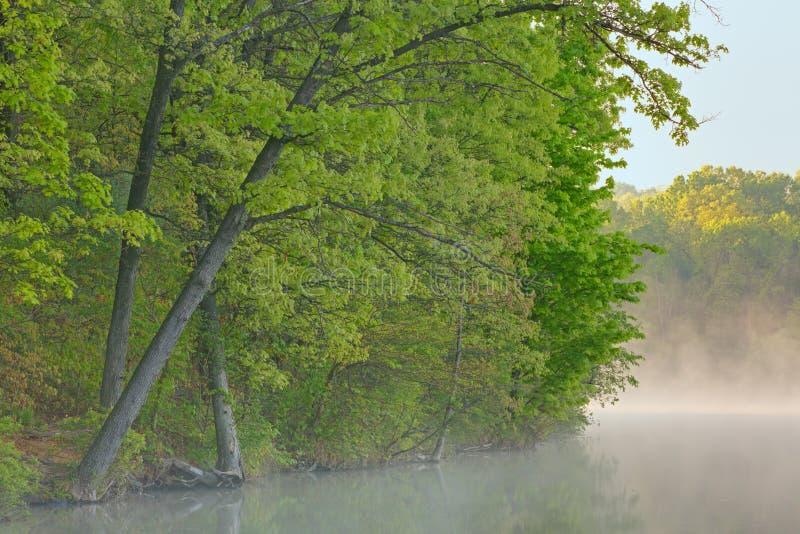 De Oever van de lente bij Zonsopgang stock foto's