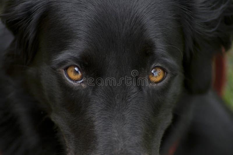 De ogen van de hond royalty-vrije stock foto
