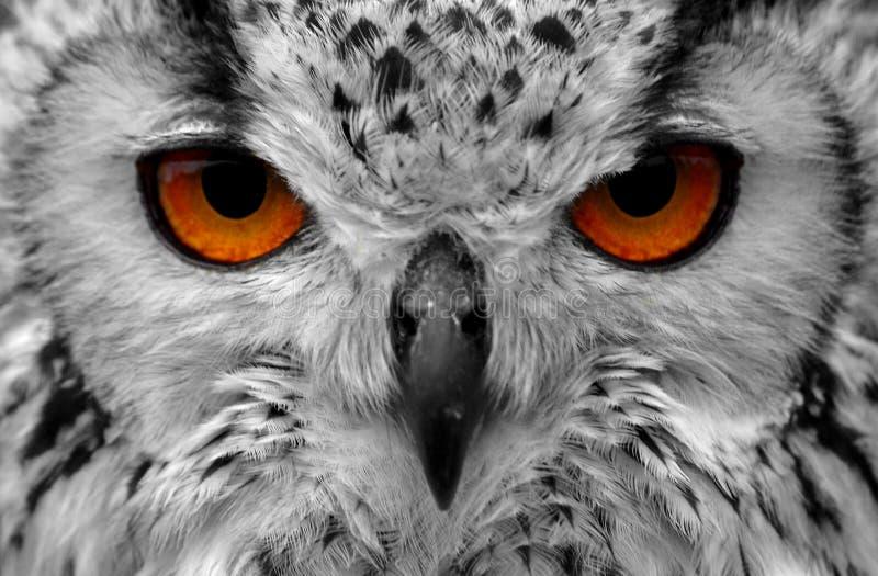 De ogen van de uil