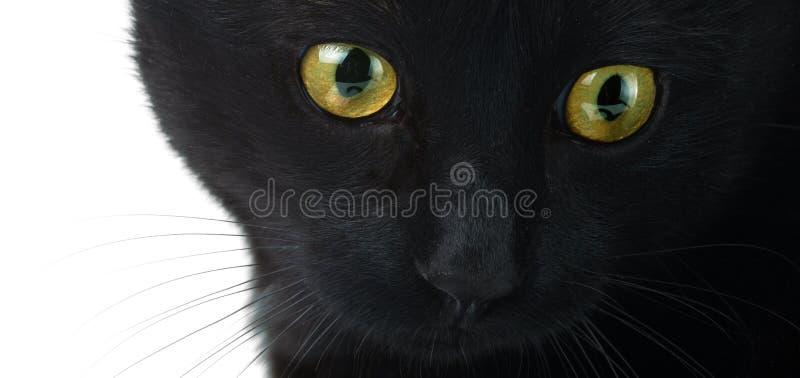 De ogen van een zwarte kat sluiten omhoog op een witte achtergrond royalty-vrije stock afbeeldingen