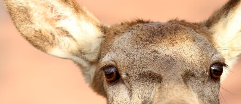 Download De ogen van herten stock afbeelding. Afbeelding bestaande uit herten - 29504329
