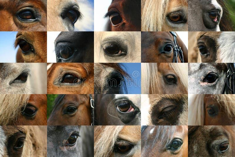 De ogen van het paard stock afbeeldingen