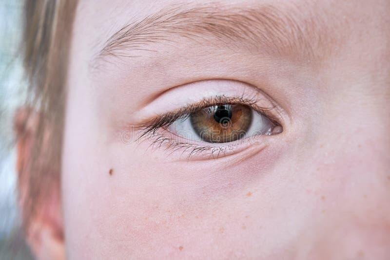 De ogen van de jonge bruine meisjes stock afbeeldingen