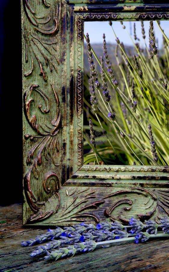 De Ogenblikken van de lavendel stock foto