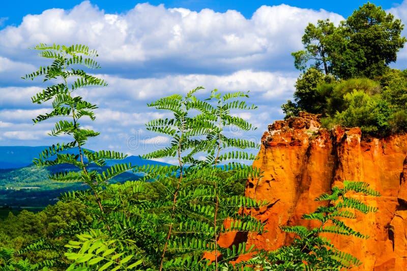 De Oker van Roussillon: Acacia tegen de achtergrond van oranje heuvels en de vallei stock afbeelding
