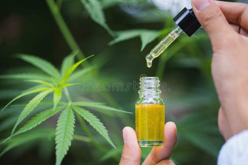 De olie van de Cbdhennep, de greep van de artsenhand en aanbieding aan geduldige medische marihuana en olie , schrijven de wettel stock fotografie