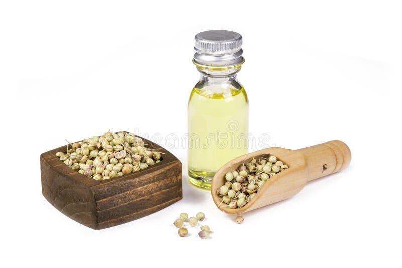 De olie van korianderzaden royalty-vrije stock foto