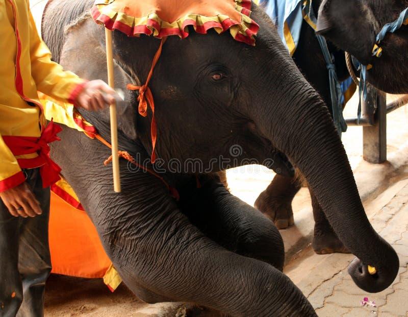De olifant royalty-vrije stock afbeeldingen