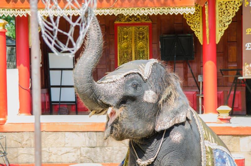De olifant die toont bij de dierentuin in Thailand dansen stock foto