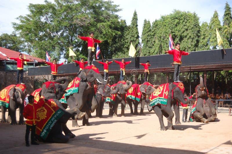 De olifant toont in de tropische tuin van Nong Nooch royalty-vrije stock fotografie