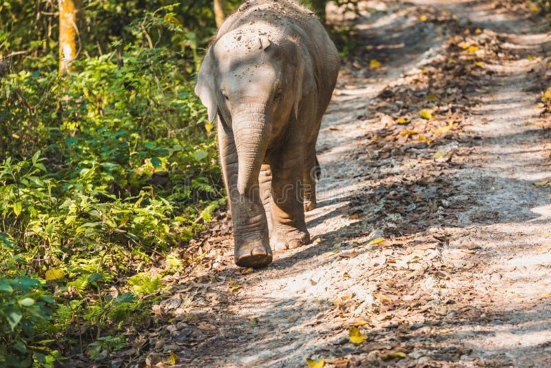 De olifant van de baby royalty-vrije stock fotografie