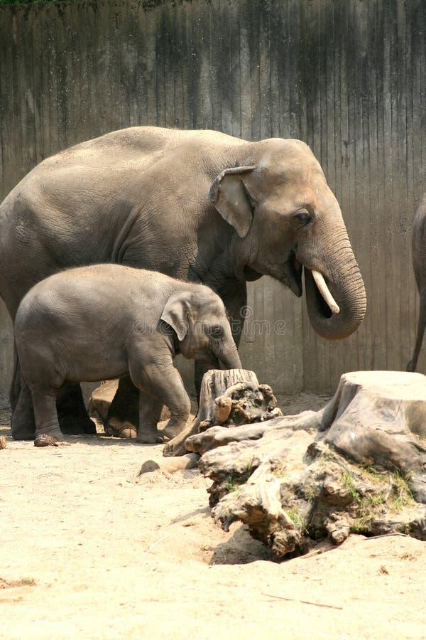 De olifant van de vader en van het kind royalty-vrije stock afbeelding