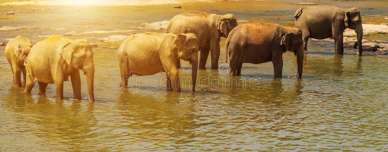 de Olifant van familieazië bij een waterhole stock foto's