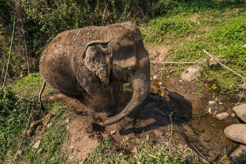 De olifant wordt vuil stock foto