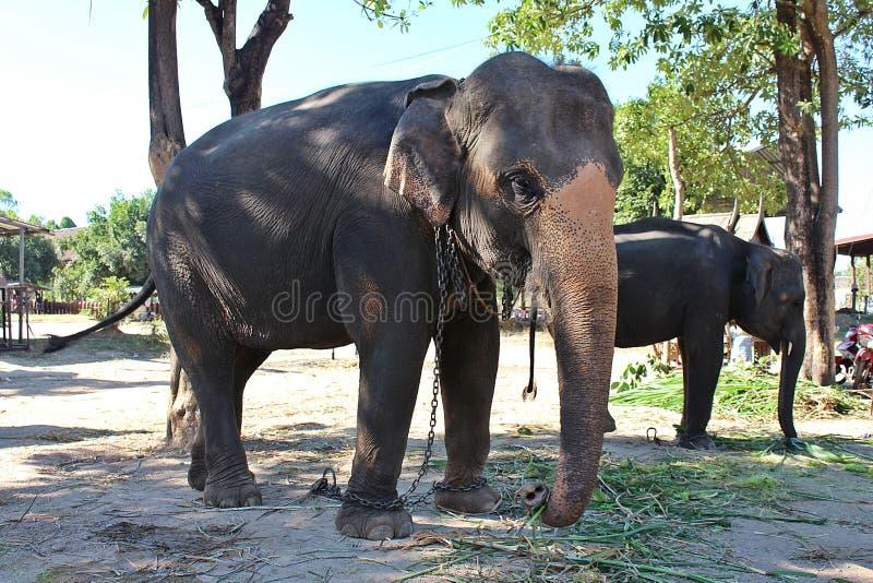 De olifanten bevinden zich onder de boom stock afbeelding