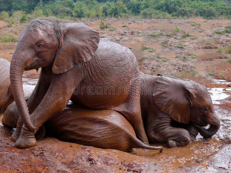 De olifanten die van de baby een modderbad in Kenia nemen. royalty-vrije stock afbeeldingen