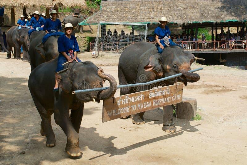De olifanten dragen 'de plaque Welkom aan Maesa-van het olifantskamp 'bij de olifant tonen in Chiang Mai, Thailand stock foto's
