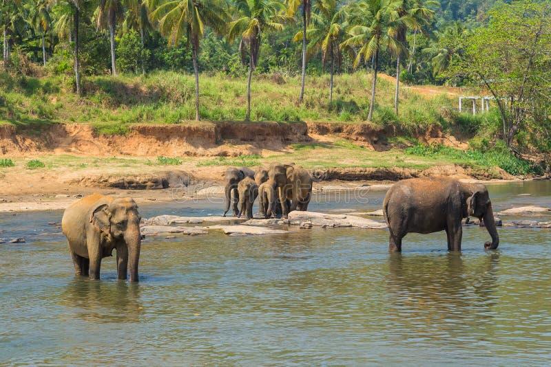 De Olifanten van Azië van de olifantsfamilie royalty-vrije stock fotografie