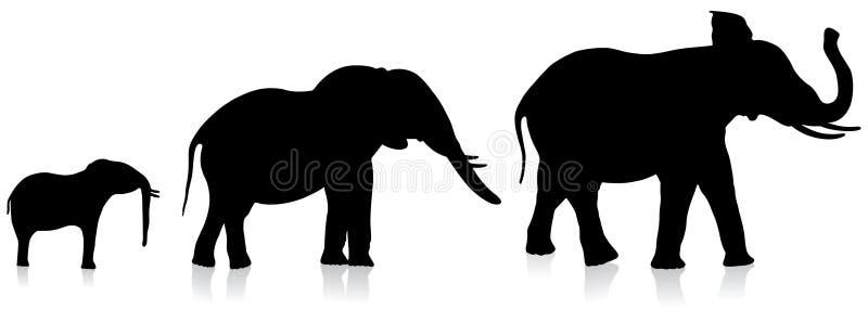 De olifanten van de volwassene en van de zuigeling op witte achtergrond vector illustratie