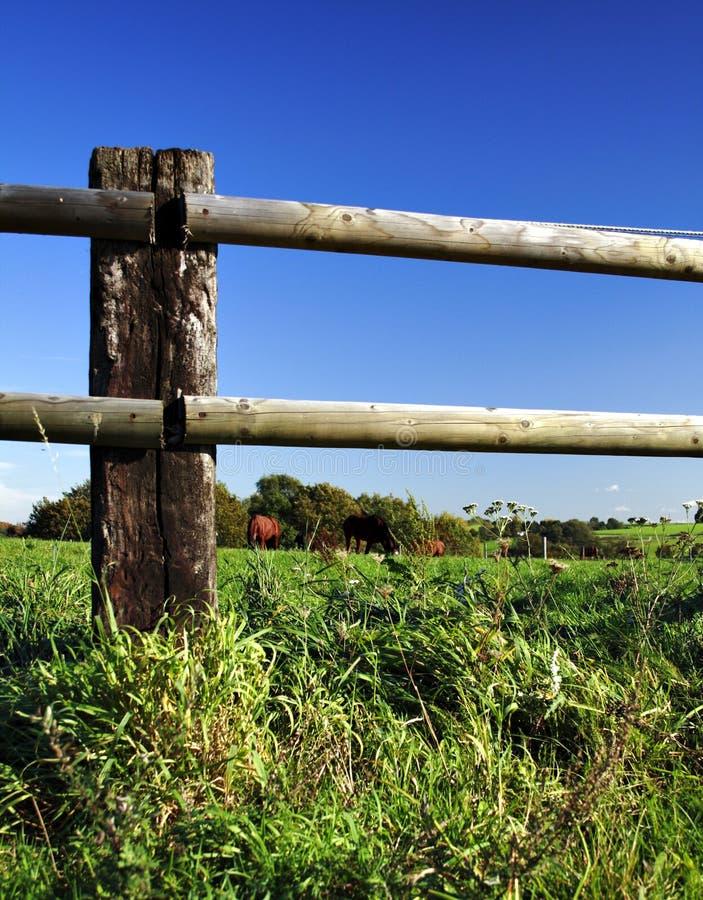 De omheining en de paarden van de paddock stock foto