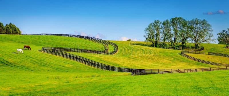 De omheiningen van het paardlandbouwbedrijf stock fotografie