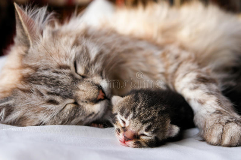 De omhelzing van de kat en van het katje stock fotografie