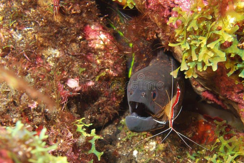 de onderwater tanddienst royalty-vrije stock afbeeldingen