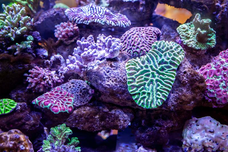 De onderwaterachtergrond van het koraalriflandschap in de diepe sering oce royalty-vrije stock fotografie