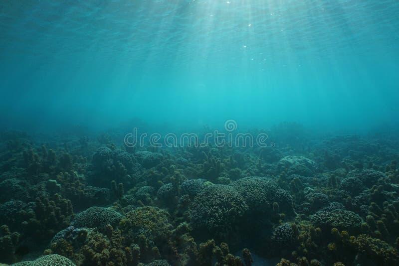 De onderwaterkoralen en de algen van de zeegezicht oceaanbodem royalty-vrije stock foto