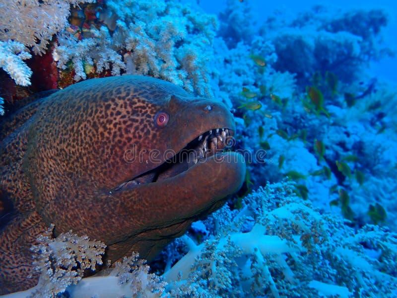 De onderwaterwereld in diep water in koraalrif en installaties bloeit flora in het blauwe wereld mariene wild, Vissen, koralen en royalty-vrije stock afbeeldingen