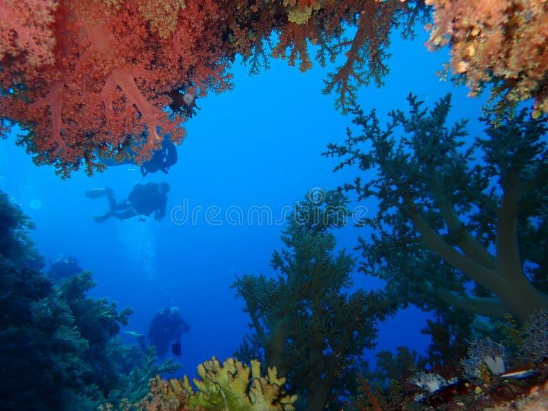 De onderwaterwereld in diep water in koraalrif en installaties bloeit flora in het blauwe wereld mariene wild, Vissen, koralen en stock afbeeldingen