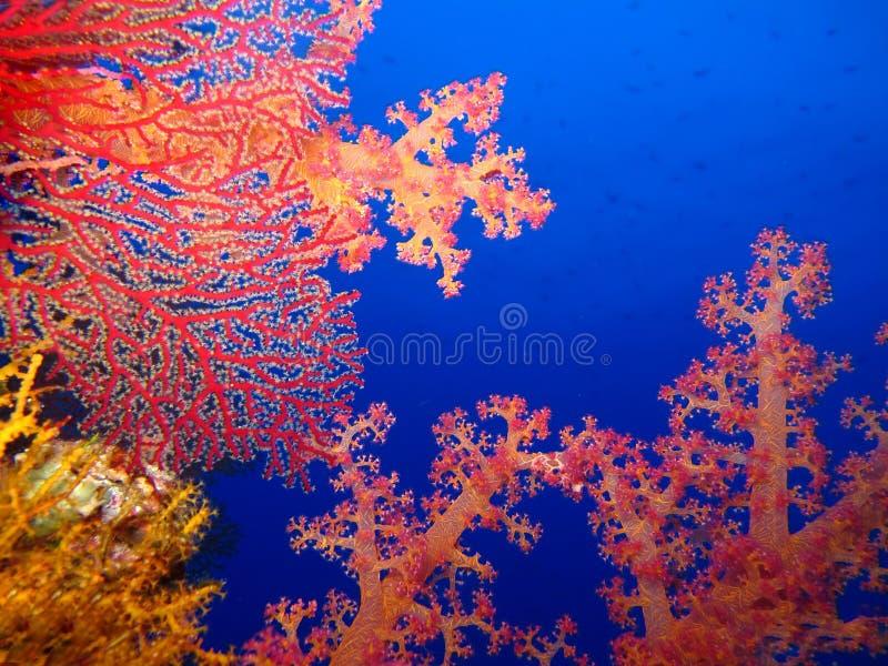 De onderwaterwereld in diep water in koraalrif en installaties bloeit flora in het blauwe wereld mariene wild, Vissen, koralen en stock foto