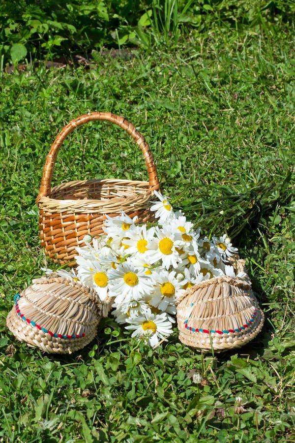 De onderwerpen, de zomer, flora, aard, vakantie, bloemen, gebied, madeliefjes, wit, tennisschoen, mand, groen gras, boeket royalty-vrije stock afbeeldingen