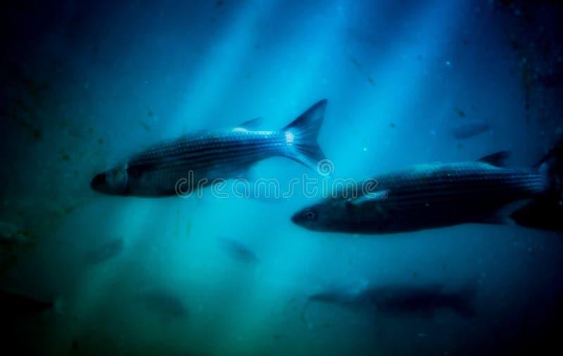 In de onderzeeër