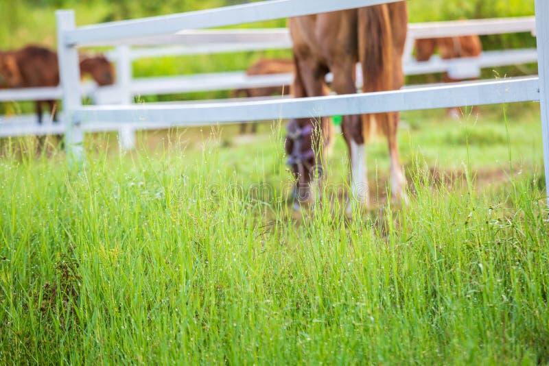De onduidelijk beeldpaarden op achtergrond en de grassen met ochtend bedauwen bij voorgrond, Groene weide voor paarden met een st royalty-vrije stock foto's