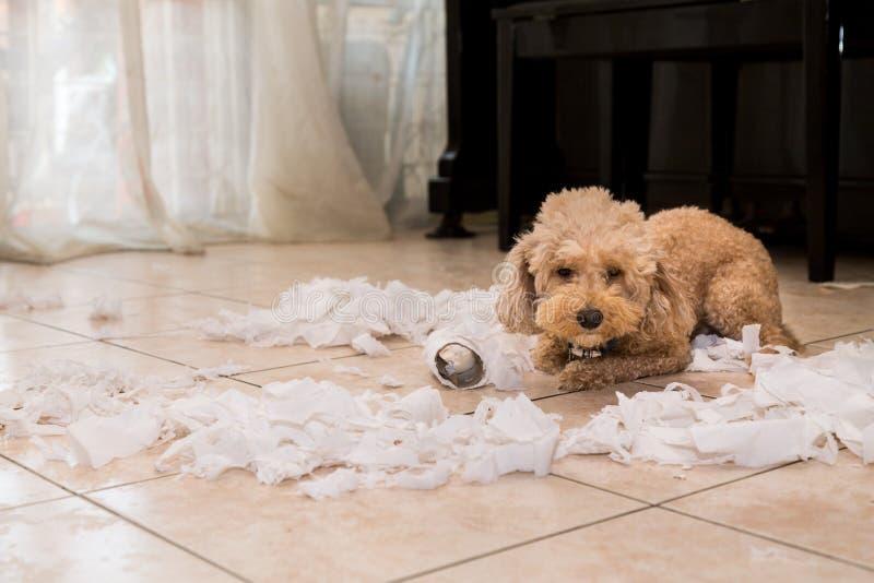 De ongehoorzame hond vernietigde weefselbroodje in stukken toen alleen huis royalty-vrije stock fotografie