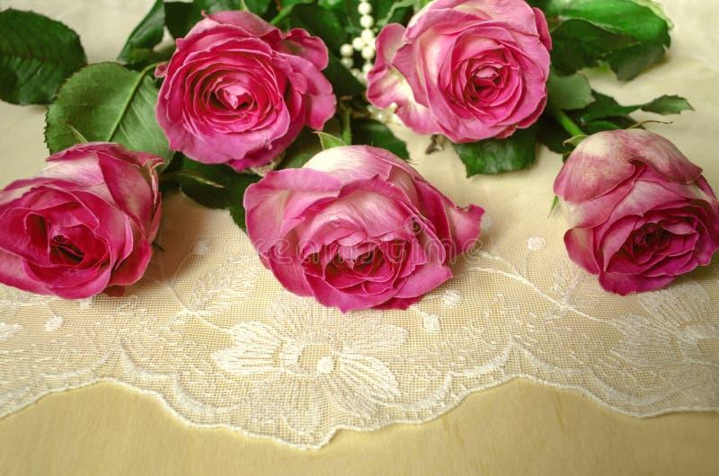 De ongeopende knoppen van grote schitterende witte die rozen met bloemblaadjes op de rand van een roze grens worden behandeld lig stock afbeelding